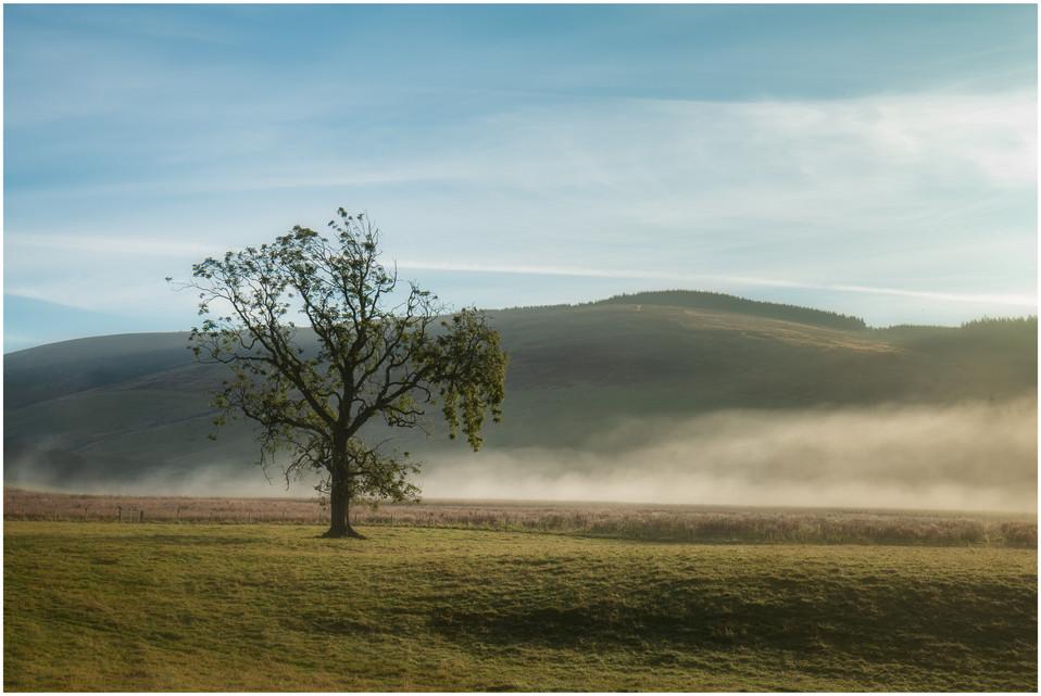 Lone Tree, Drumtochty