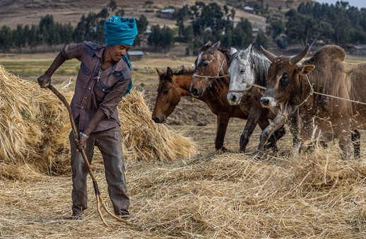 Harvest in Ethiopia by Anne May