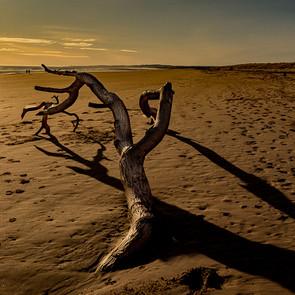 Sunset Walk by John Griffith