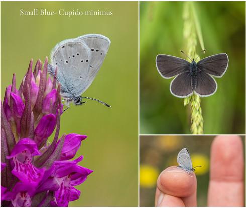 Small Blue by Ben Freeman