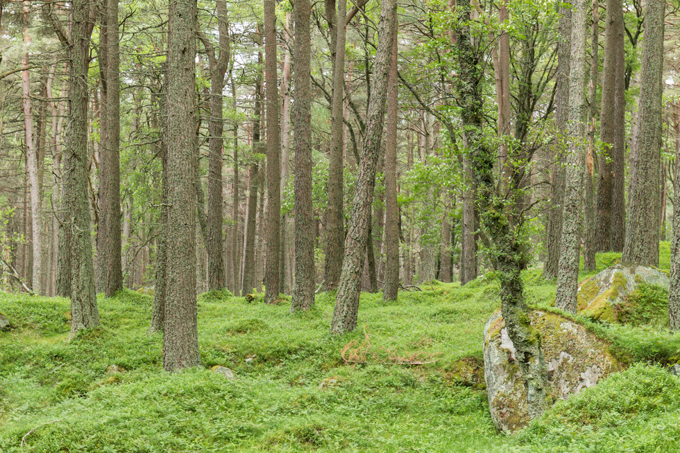 Woodlands around Glas-allt-Shiel, where Queen Victoria used to hang out with her 'favourite' John Brown