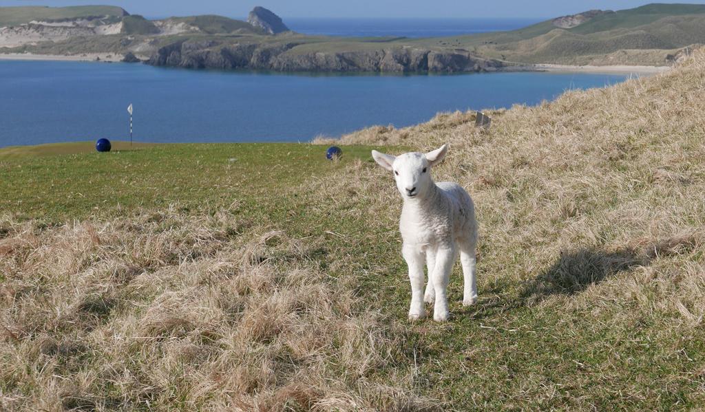 Ewe Looking at Me by Jennifer Moffat