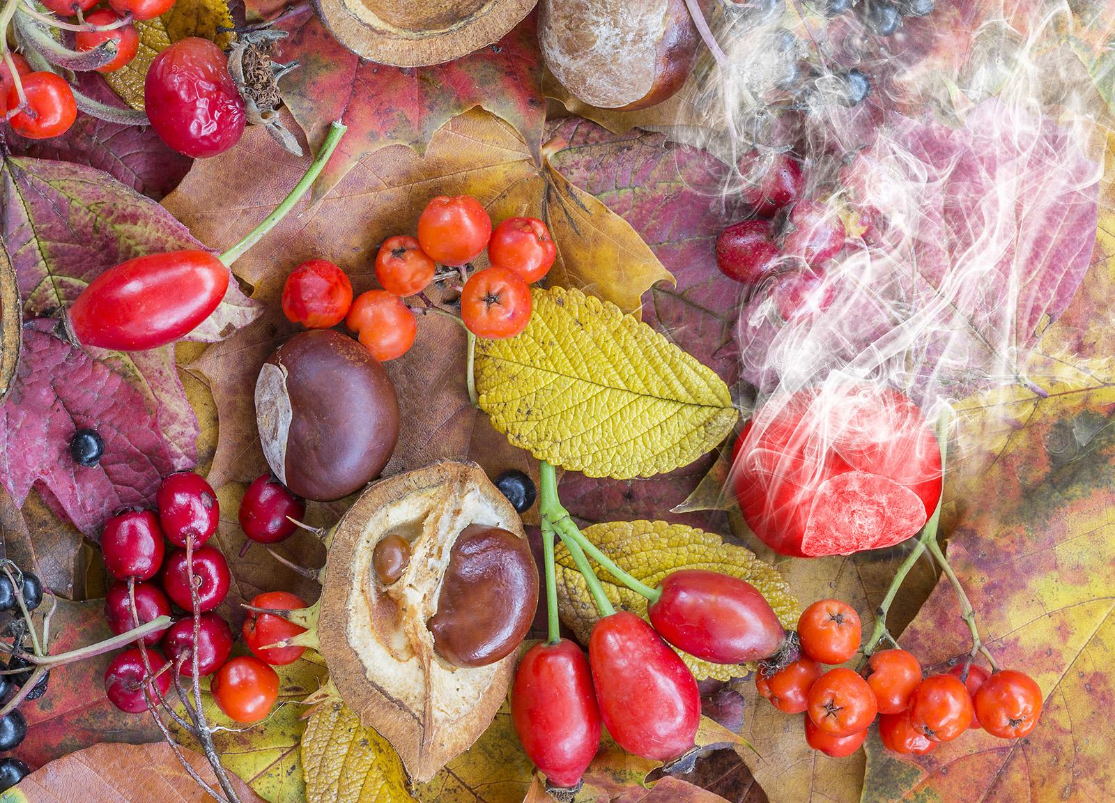 One red hot Chestnut - Ian Suttie