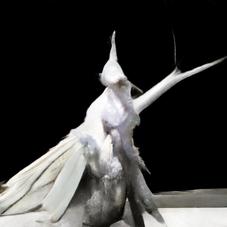 the chamberlain moth
