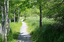 Toronto-Algonquin Greenway