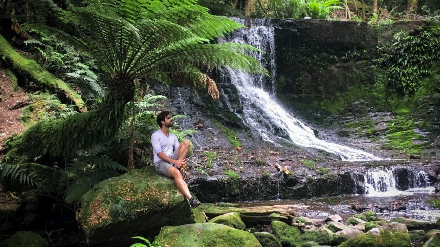 Rainforest-870x490