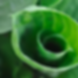 Bildschirmfoto 2019-09-05 um 11.05_edite