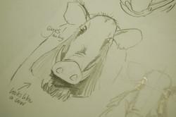 Boar Research 06