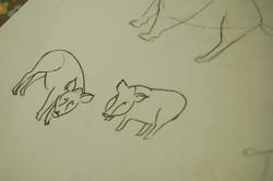 Boar Research 04