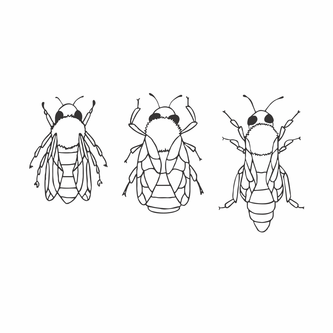 Bee Hierarchy-01.png
