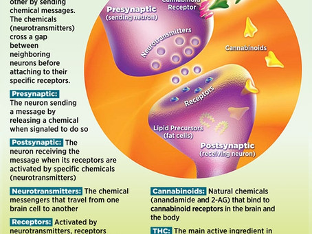 NEURONS RECEPTORS AND THE ENDOCANNABINOID SYSTEM