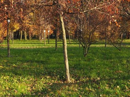 Un bosco del ricordo anche a Desenzano!