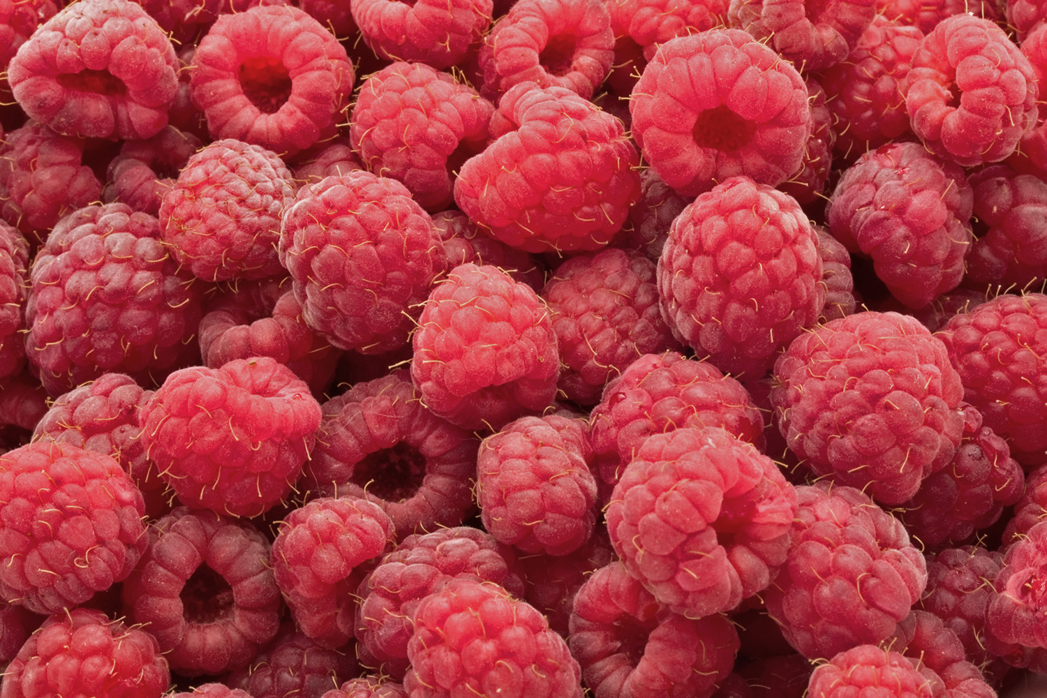 Totally Love Raspberries!