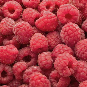 Raspberry: A Pregnancy Workhorse and Lifelong Friend to Women