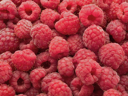 """Canine """"Raspberry Jam"""" Disease: Everything You Need To Know!"""