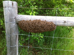 swarm on the fence