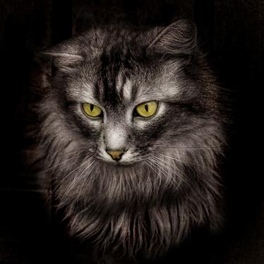 Viking Cats: Sacred Betrothal Beasts?