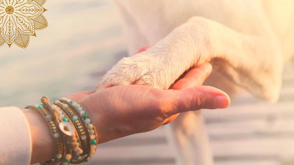 Praxis für Mensch & Tier (2).jpeg