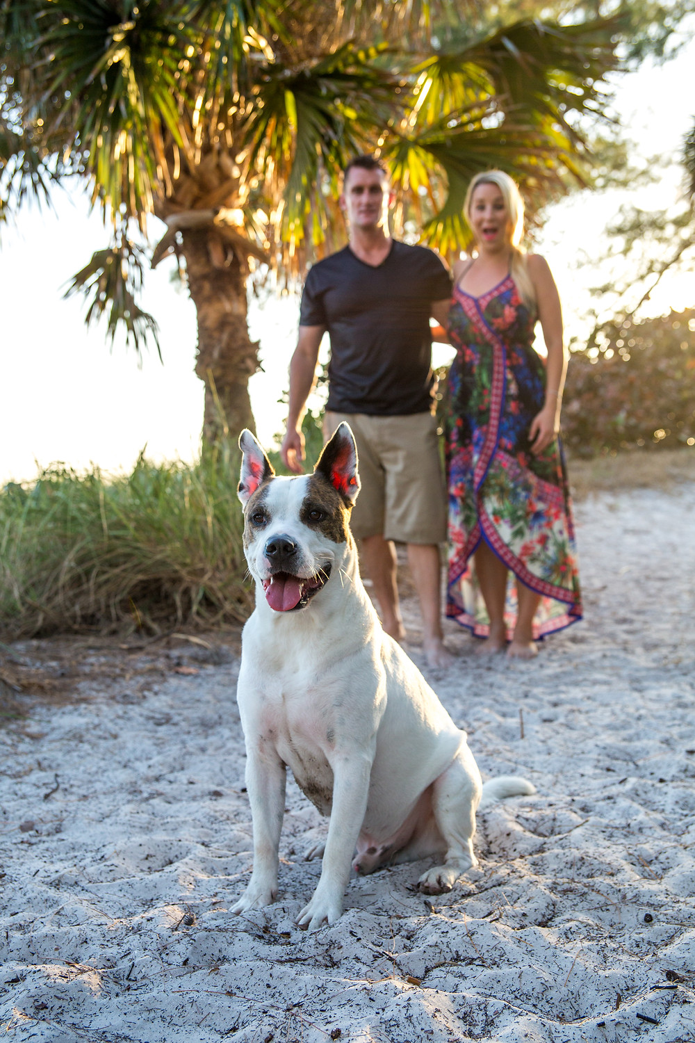 Coquina Beach Photography Romantic Beach Ocean Anna Maria Island Sunset Dog