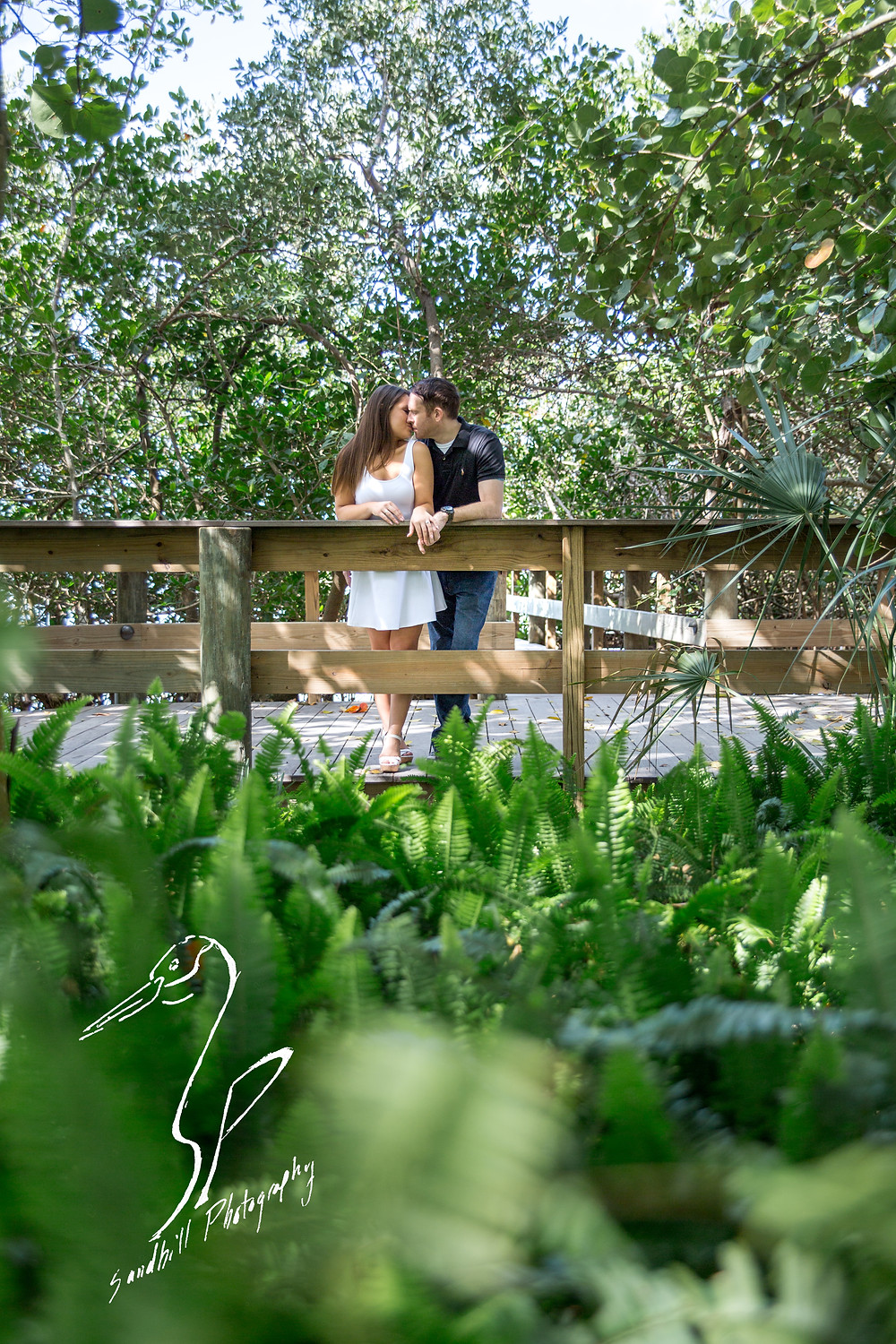 Engagement Photography Selby Gardens Boardwalk ferns Sandhill Photography
