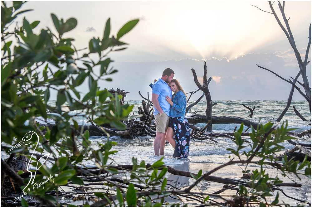 Longboat Key Engagement Photographer, view through the mangroves as a couple stands embracing in the water of a drift wood beach as the sun sets