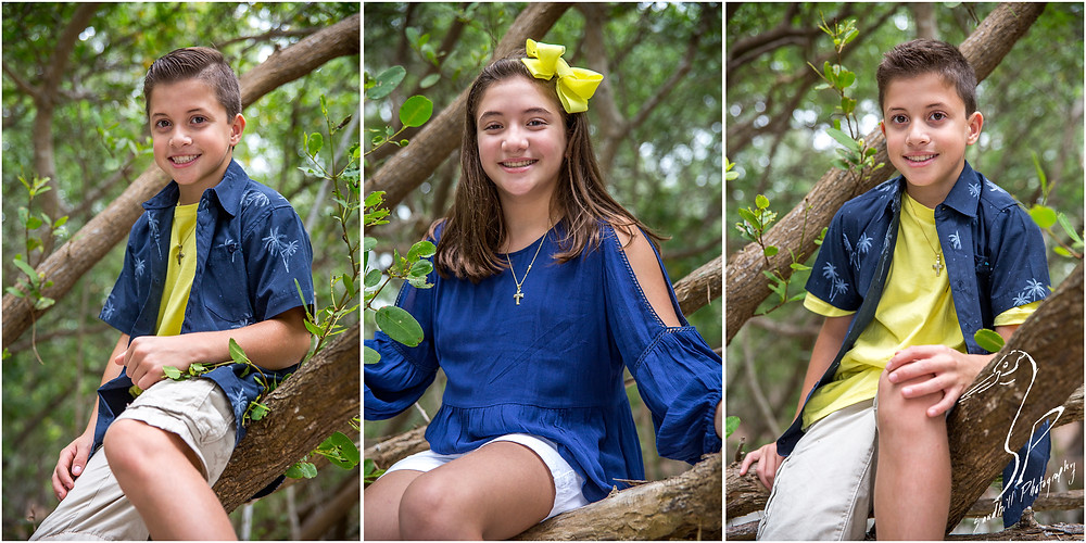 Longboat Key Family Photographer, portraits of 3 siblings sitting in a tree