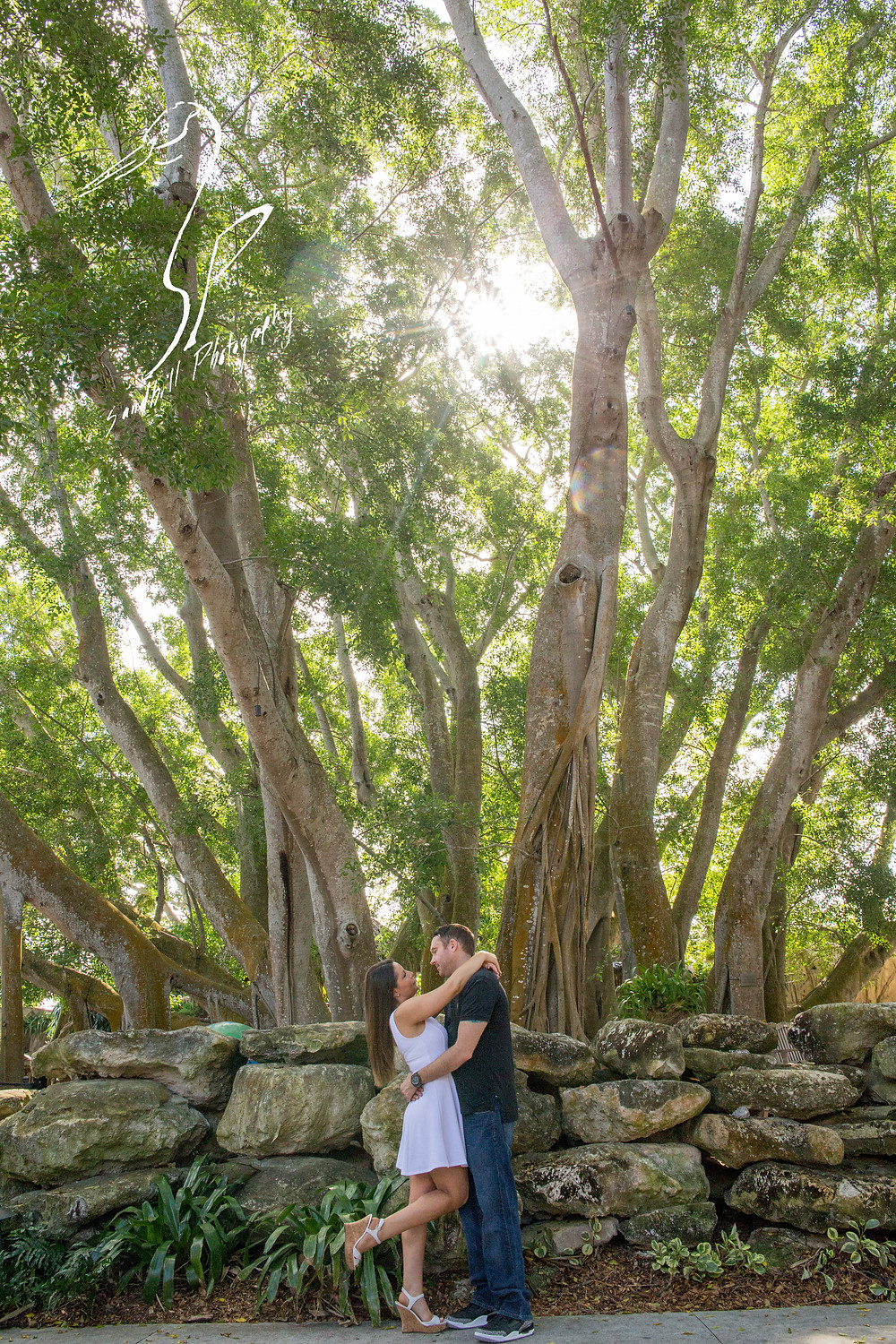 Engagement Photography Selby Gardens Banyan Tree Sandhill Photography
