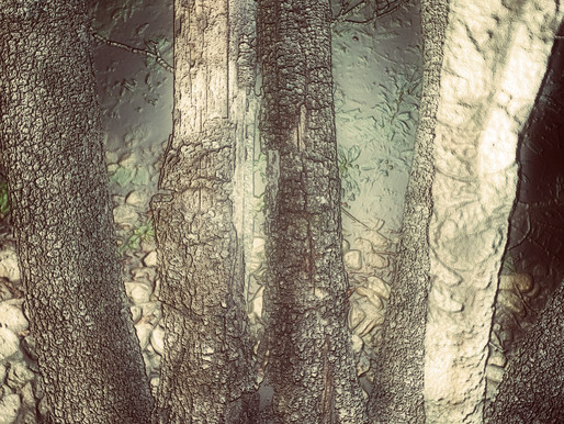 A Tapestry of Trees