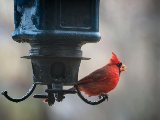 A Splash of Red Against A Wintry Backdrop