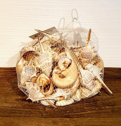 Muschel Netz