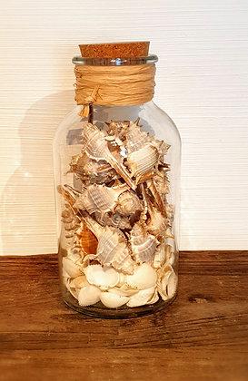 Decostar Glas mit Muscheln