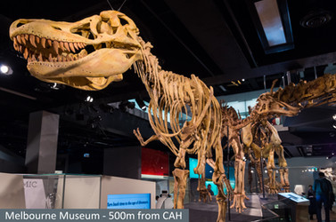 Melbourne Museum-500 m from CAH.jpg