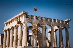 Temple d'Aphaïa, l'Île d'Égine