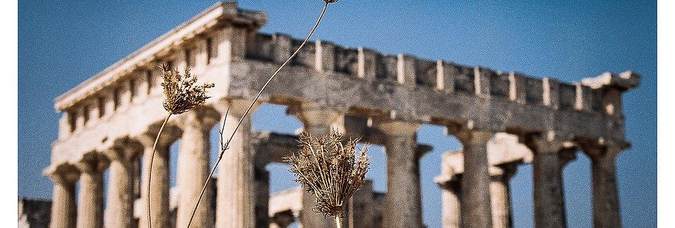 Temple d'Aphaïa