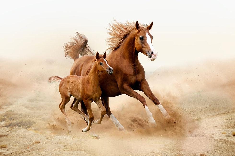 лошадки.jpg
