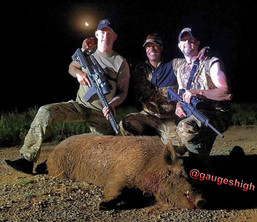 Pig2.jpg
