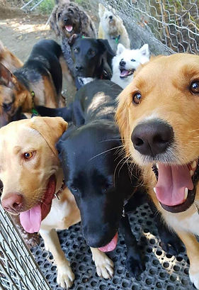 RV Doggy Daycare.jpg