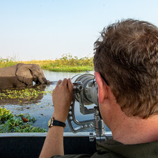 Getting close and personal to the great African Elephant, Chobe, Botswana