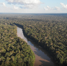 Stunning view of the lowland Amazon Rainforest in the heart of Peru