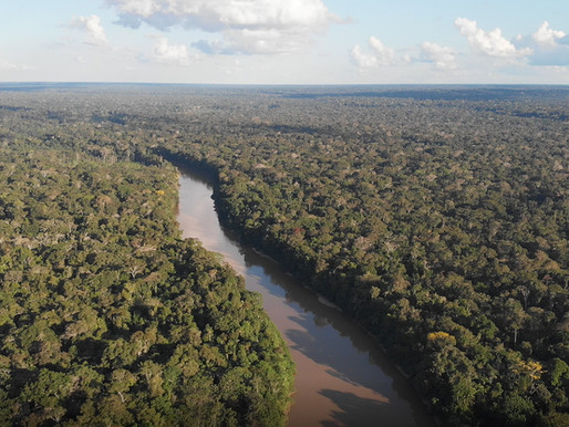 Why the Amazon Rainforest?