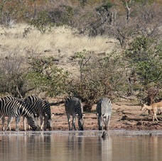 Wildlife congregate at the side of the Chobe River.