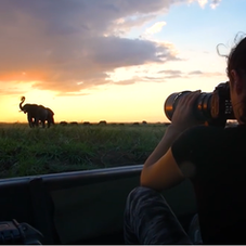 Evening photographic shoot with African Elephants on the Chobe River.