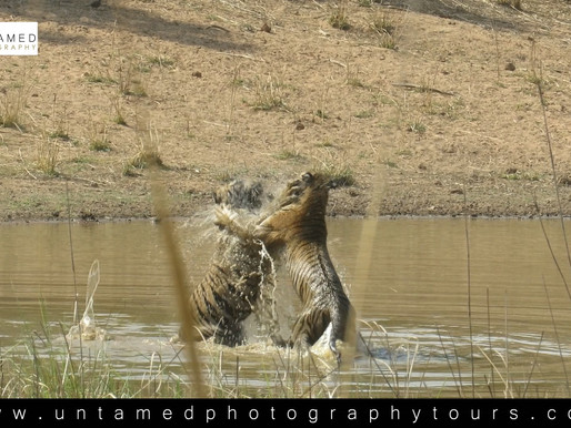 Tiger Photo Safaris, The Water-hole
