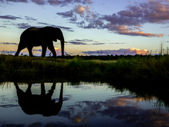 African Elephants, Vic Falls - Chobe - Okavango Delta Photo Workshop/Safari