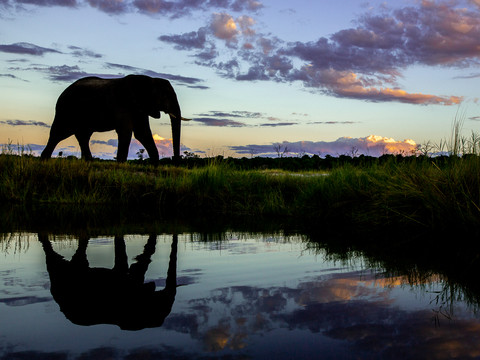African Elephants, Vic Falls - Chobe - Okavango Delta Photo Workshop/Safari