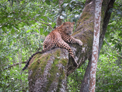 Indian Leopard, Indian Wildlife Photography Workshop/Safari