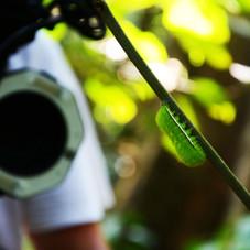 Getting close to one a Io Moth Caterpillar, Tmabopata, Peru