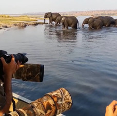 Our clients get great photographic oppotunities of large herds of Elephants.