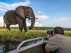 African Elephant & Guest, Vic Falls - Chobe - Okavango Delta Photo Workshop/Safari