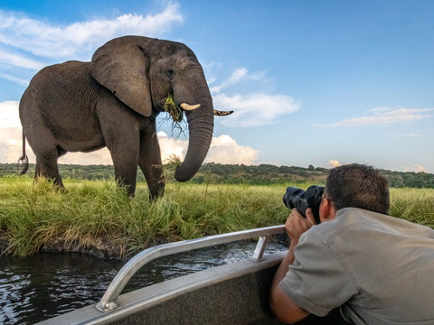 African Elephant & Guest, Vic Falls - Chobe - Okavango Delta Photo Workshop/Safari